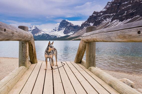 Shutterstock.com nuotr./Banfo nacionalinis parkas