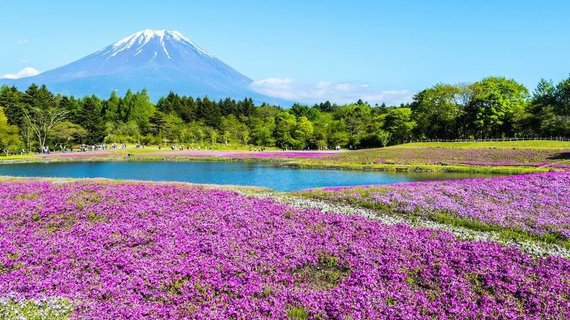 Asm.archyvo nuotr./Japonija. Shiba sakura