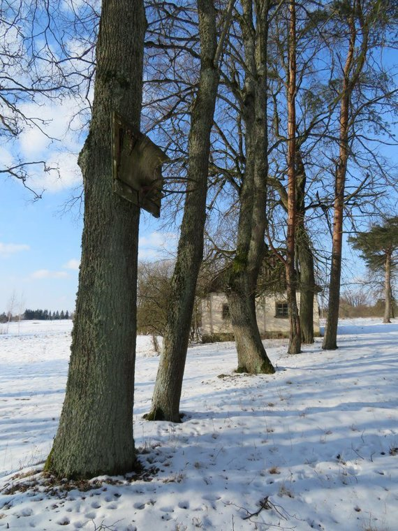 V. Bičiūnaitės ir Martynonių kaimo bibliotekos archyvo nuotr./Senųjų laikų didybę primena ir eilėmis išsirikiavę medžiai
