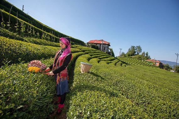 Shutterstock.com nuotr./2. Rizė, Turkija