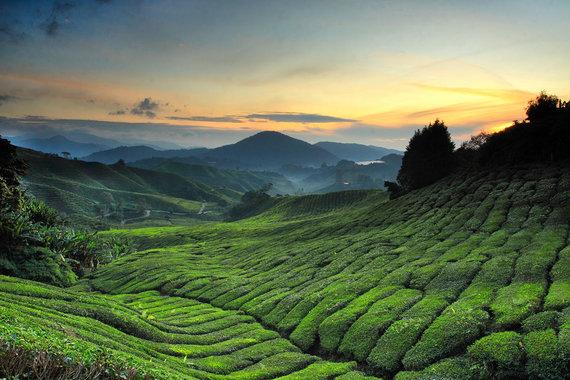 Shutterstock.com nuotr./7. Kamerono aukštumos, Malaizija