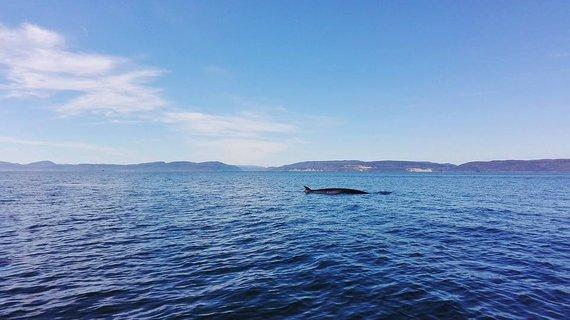 """""""Travel Planet"""" nuotr./Banginių stebėjimas Kanadoje"""