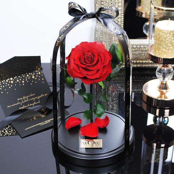 Karolio Strazdo asmeninio archyvo nuotr. /Raudona rožė po stiklu