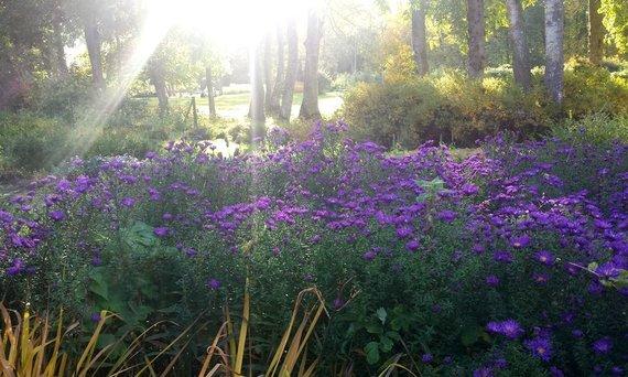 Asmeninio archyvo nuotr. /Daugiamečiai augalai rudenį