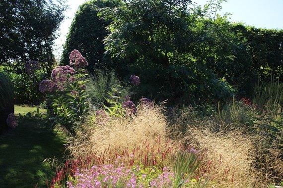 Asmeninio archyvo nuotr. /Varpiniai augalai ir bioįvairovė