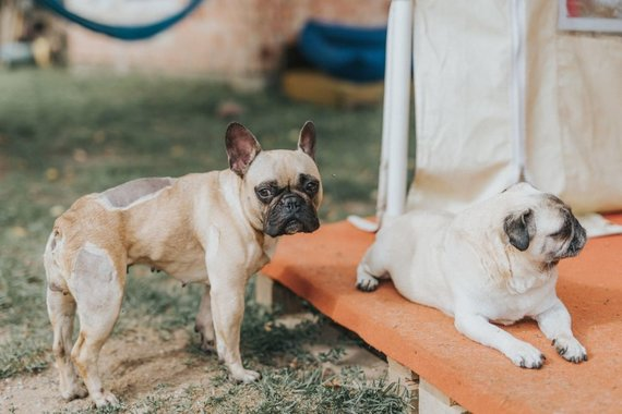 Dogspoto nuotr. /Dogspoto gyventojai – suplotasnukiai šunys