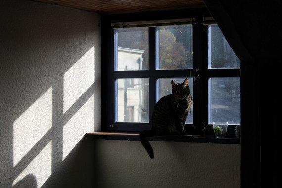 Asmeninio archyvo nuotr. /Katinų viešbutis