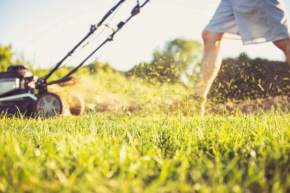Projekto partnerių nuotr. /Žiedadulkėms alergiškiems asmenims reikėtų vengti vejos pjovimo