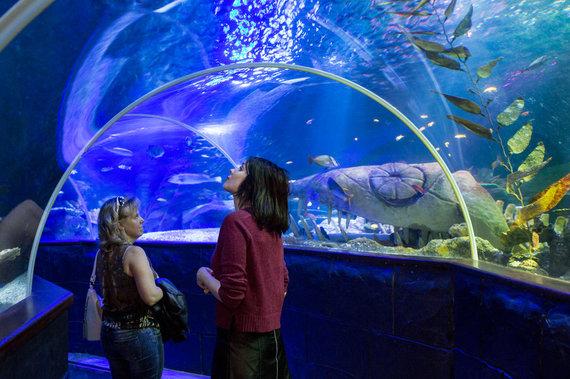 """""""Sea Life"""" jūrų muziejus / Turas po Helsinkį / Gyčio Vidžiūno nuotr."""