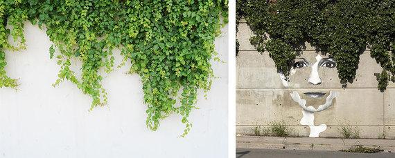Projekto partnerio nuotr./Vijokliai / Dano Bergerono portretas