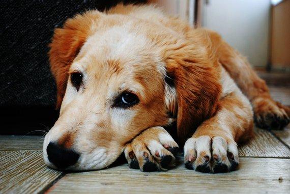"""""""PetCity"""" nuotr./Šuo"""