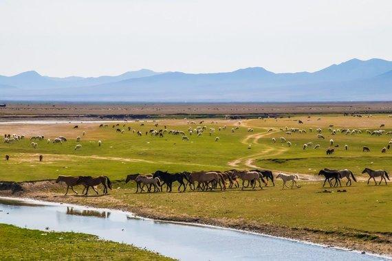 """Kelionių organizatoriaus """"GRŪDA"""" nuotr./Hustai nacionalinis parkas ir jame gyvenantys paskutiniai tikri laukiniai arkliai, Mongolija"""