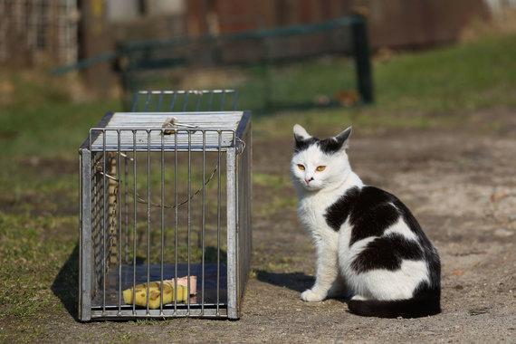 Svajūnas Stroinas / 15min nuotr./Sterilizacijai gaudomos benamės katės