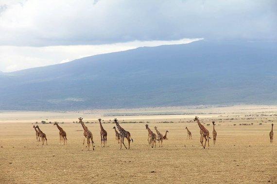 """Kelionių organizatoriaus """"GRŪDA"""" nuotr./Serengečio nacionalinis parkas"""