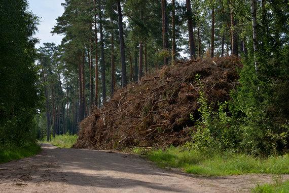 Selemono Paltanavičiaus nuotr./Miškuose kaupiamos biokuro atsargos