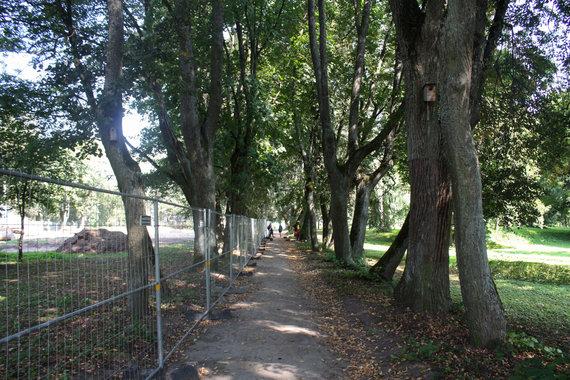 Trakų Vokės dvaro sodybos parke vertinamos liepos