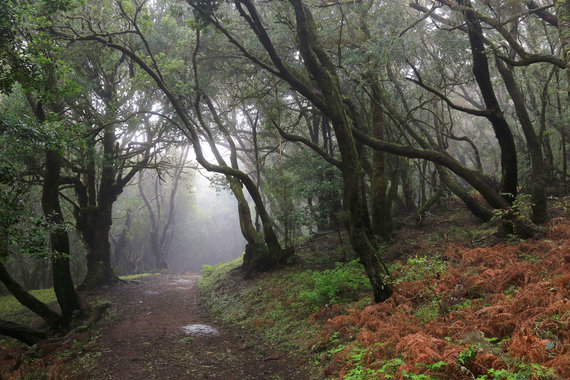 Vida Press nuotr./Garachonajaus nacionalinis parkas La Gomeros saloje