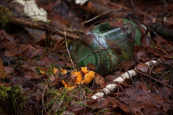 Ringailė A. Sudeikytė/Ramuvos miškas. Stiklainis šalia išdygusi voveraitė. Aplink mėtėsi ir į samanas įstrigusios kyšojo stiklo šukės, taip keldamos ne tik gaisro pavojų miškui bet ir gyvūnams.
