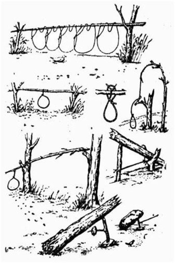 Partnerio nuotr./Daug kaimo gyventojų laukinius žvėrelius medžiojo nelegaliai laikytais šautuvais, spąstais ir ypač kilpomis