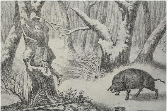 Užsakovo nuotr./Senos istorijos apie į medžius nuo žvėrių lipančius medžiotojus ne iš piršto laužtos...