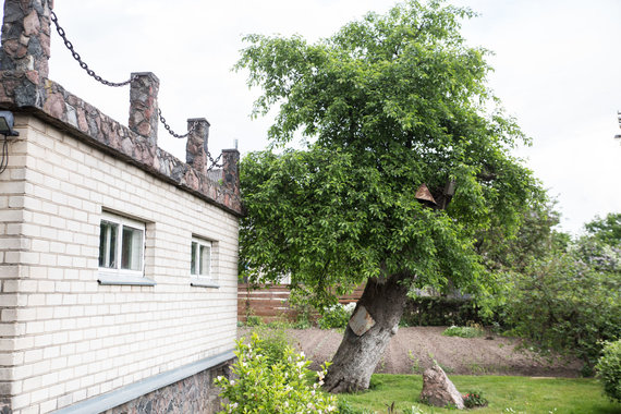 Mariaus Vizbaro / 15min nuotr./Seniausia obelis Lietuvoje