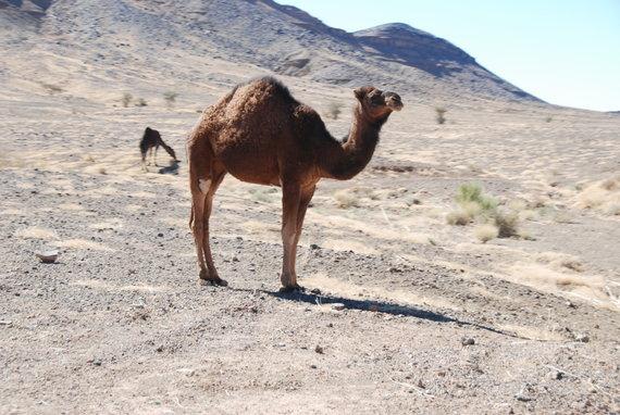 Aldonos Juozaitytės nuotr./Trečioji Tuarego ralio diena