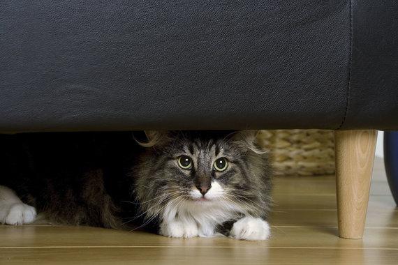 Vida Press nuotr./Katė po lova