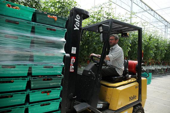 """Reuters""/""Scanpix"" nuotr./Pomidorų ūkis Jungtinėje karalystėje"