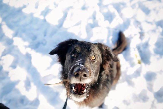"""""""Lesės"""" nuotr./Atėjus šalčiams veterinarai pataria, kaip apsaugoti savo augintinius nuo peršalimo"""