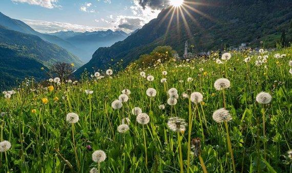 Asmeninio archyvo nuotr./Šveicarijos Alpės