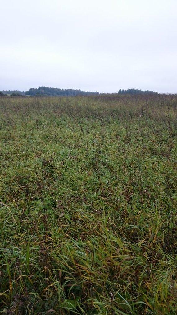 NMA nuotr./Grikių ar piktžolių laukas – tarp NMA ir ūkininko įsiplieskė ginčas