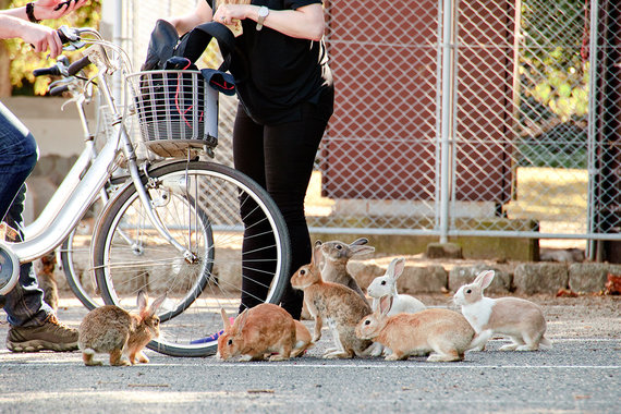 Shutterstock nuotr./Triušių sala, Japonija