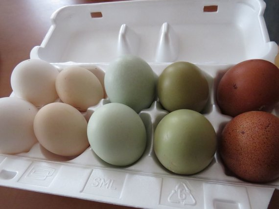 Andriaus Grygelaičio nuotr./ Kiaušiniai iš Rolando Paužos paukščių ūkio