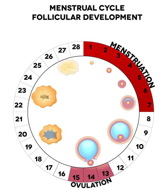 123RF.com nuotr./Menstruacinis ciklas