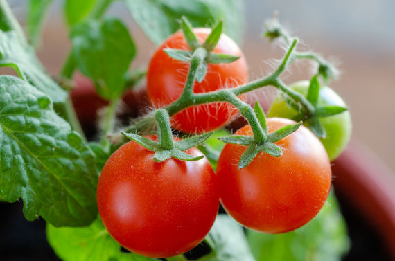 123RF.com nuotr./Pomidorai