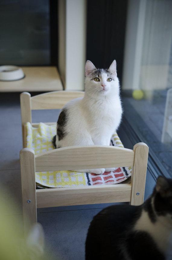 """Partnerio nuotr./""""Naminukų kačių namai"""" – oazė, kurioje jūsų laukia naujas augintinis"""