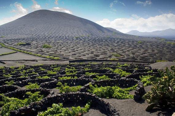 123RF.com nuotr./Po lapili sluoksniu augantis vynuogynas