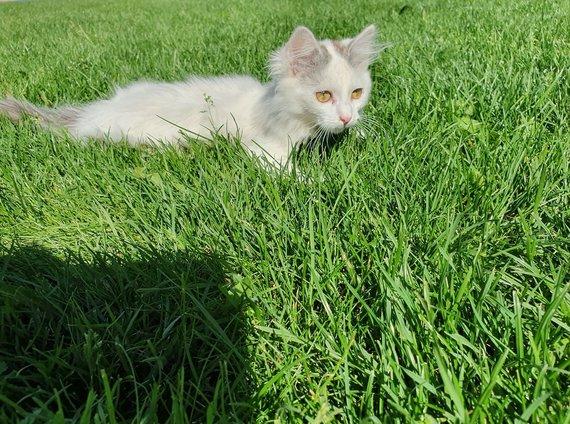 Asmeninio archyvo nuotr. /B.Dapkienės ūkyje gyvenantis katinas Ajezulis.