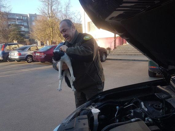 Panevėžio RAAD nuotr./Katino gelbėjimas