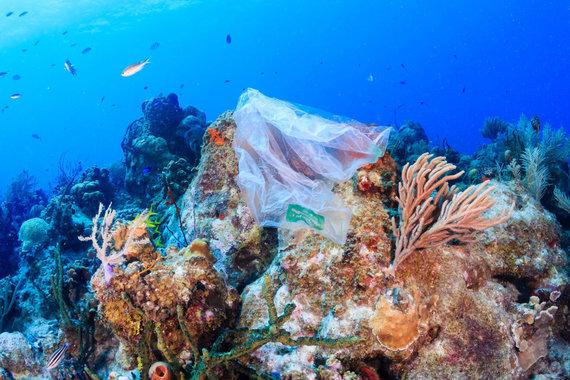 123RF.com nuotr./Plastikinis maišelis ant tropinių koralų
