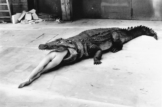 Helmuto Newtono nuotr./Krokodilas, Vupertalis, 1983