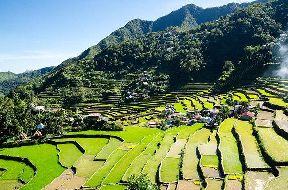 Shutterstock nuotr./Banaue ryžių terasos, Filipinai