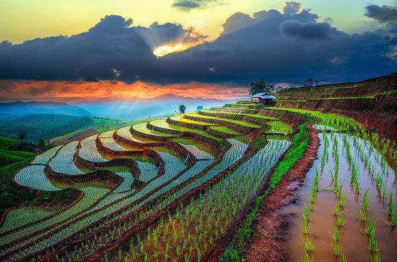 Shutterstock nuotr./Čiangmajaus apylinkių ryžių terasos, Tailandas