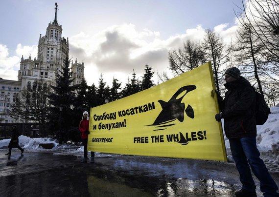 """""""Greanpeace"""" aktyvistai Maskvoje protestuoja ir reikalauja orkų bei baltųjų banginių paleidimo į laisvę"""