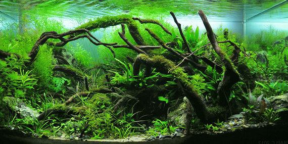 "Partnerio nuotr./ ""Aquascape"" augalinis akvariumas"