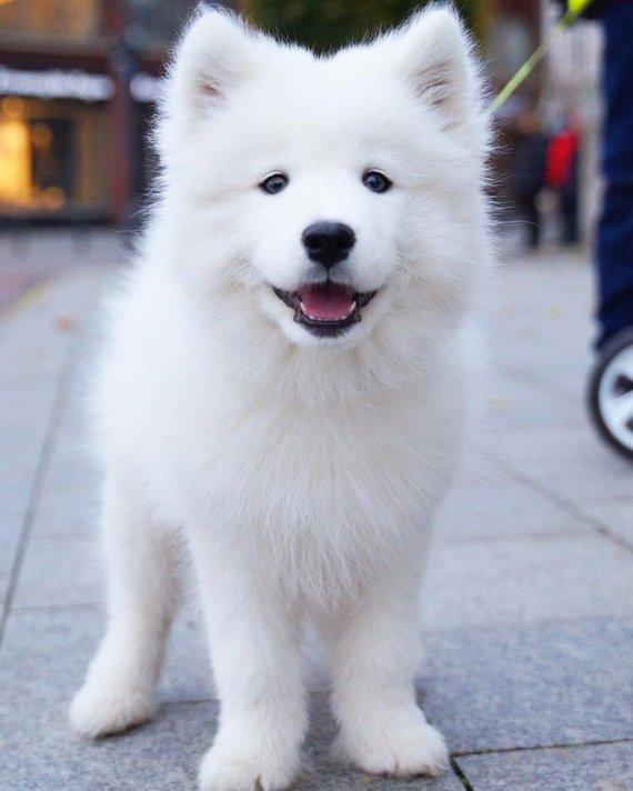 Asmeninio albumo nuotr./Gabijos Kavaliauskaitės fotografuotas šuo