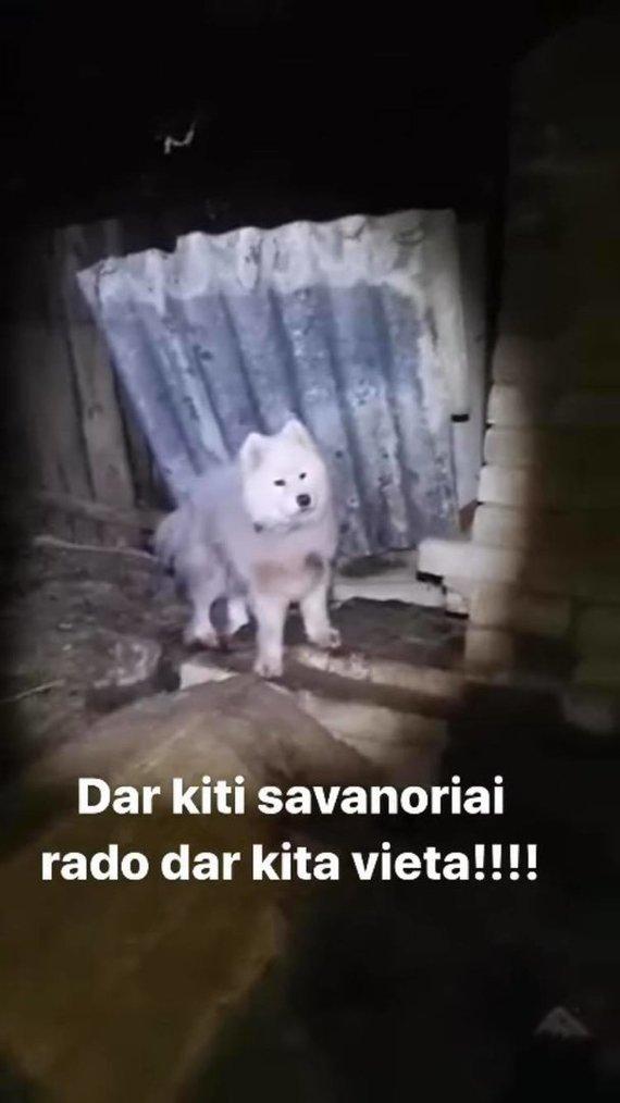 Stopkadro nuotr./Deimantės Guobytės gyvūnų gelbėjimo operacija