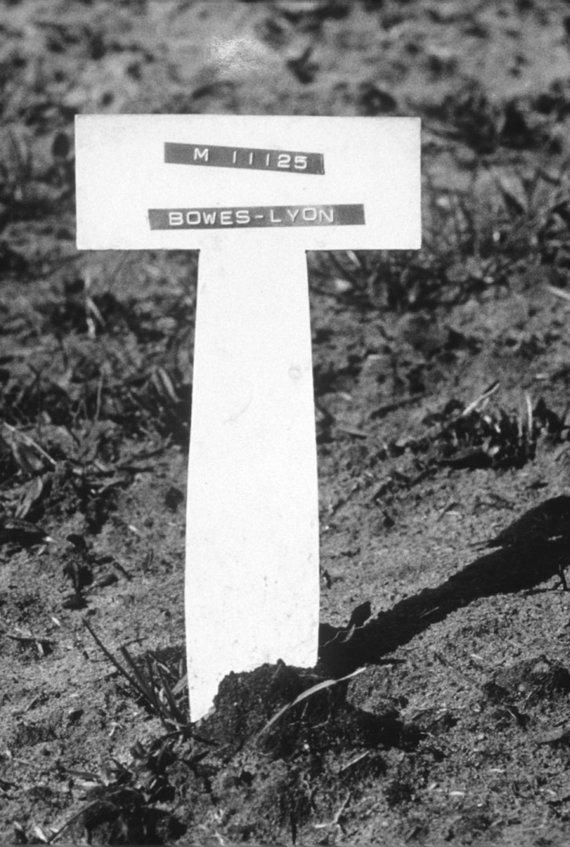 Vida Press nuotr./Nerissos kapas