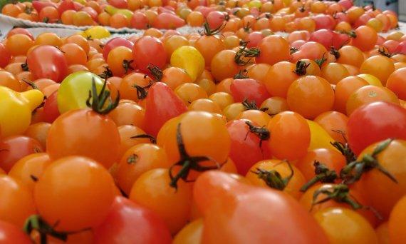 Asmeninio archyvo nuotr. /Organiškai užaugintos daržovės ir JAV prieinamos ne visiems