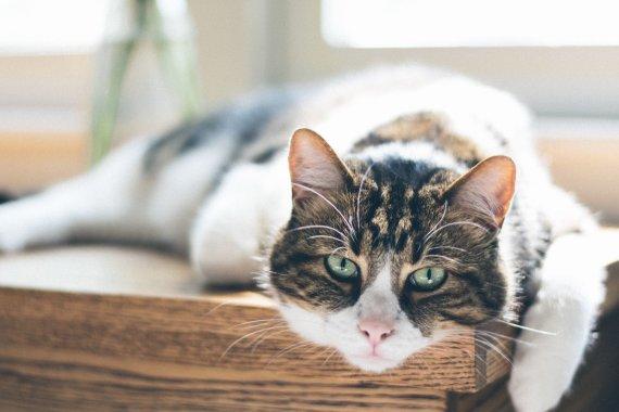 """""""PetCity"""" veterinarijos klinikos nuotr./Katė"""